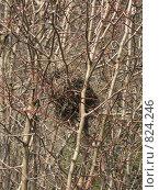 Купить «Птичье гнездо», фото № 824246, снято 14 апреля 2009 г. (c) Юлия Дашкова / Фотобанк Лори