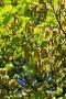 Береза весной, фото № 825558, снято 24 апреля 2008 г. (c) Argument / Фотобанк Лори