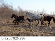 Купить «Мчатся кони по дороге», фото № 826286, снято 20 апреля 2009 г. (c) Александр Тараканов / Фотобанк Лори