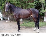 Экстерьер лошади. Стоковое фото, фотограф Юлия Орина / Фотобанк Лори
