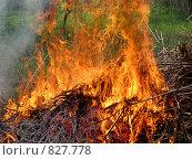 Пламя. Стоковое фото, фотограф Екатерина Петрова / Фотобанк Лори