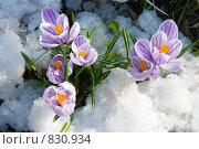 Купить «Первые цветы», фото № 830934, снято 26 апреля 2009 г. (c) Елена Блохина / Фотобанк Лори