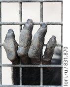 Рука примата в клетке. Стоковое фото, фотограф Инна Додица / Фотобанк Лори