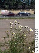 У дороги. Стоковое фото, фотограф Омельян Светлана / Фотобанк Лори