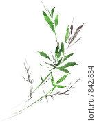 Растение. Акварель. Стоковая иллюстрация, иллюстратор Наталия Печёрских / Фотобанк Лори