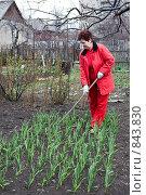 Купить «Работа в огороде. Прополка», фото № 843830, снято 21 апреля 2009 г. (c) Галина Лукьяненко / Фотобанк Лори