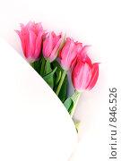 Розовые тюльпаны в белой бумаге. Стоковое фото, фотограф Павкина Зоя / Фотобанк Лори