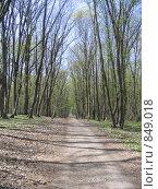 Весенний лес. Стоковое фото, фотограф Владимир Бегунов / Фотобанк Лори