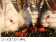 Кролики. Стоковое фото, фотограф Багрова Алеся / Фотобанк Лори