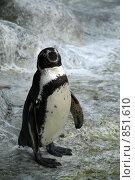 Пингвин. Стоковое фото, фотограф Дания Насрутдинова / Фотобанк Лори