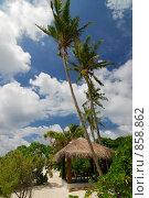 Купить «Ветер колышет пальмыпал», фото № 858862, снято 12 октября 2008 г. (c) Владимир Овчинников / Фотобанк Лори