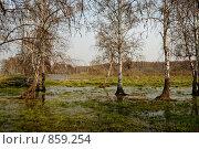 Весна. Разлив. Стоковое фото, фотограф Виктор Ковалев / Фотобанк Лори