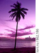 Купить «Одна пальма на фоне сиреневого ночного неба», фото № 862186, снято 26 сентября 2008 г. (c) Александр Косарев / Фотобанк Лори