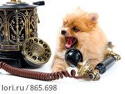 Щенок с телефоном (2009 год). Редакционное фото, фотограф Vladimir Suponev / Фотобанк Лори