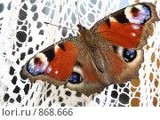 Купить «Бабочка на занавеске», фото № 868666, снято 3 мая 2009 г. (c) Антон Корнилов / Фотобанк Лори