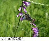 Бабочка на цветке. Стоковое фото, фотограф Александр Патрушев / Фотобанк Лори