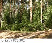 Купить «Лес», фото № 873302, снято 11 мая 2009 г. (c) Анна Белова / Фотобанк Лори