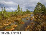 Купить «Верховое болото с кочками, водой и маленькими деревьями», фото № 879934, снято 22 мая 2008 г. (c) Максим Антипин / Фотобанк Лори