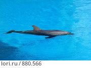 Купить «Дельфин», фото № 880566, снято 7 мая 2009 г. (c) Яна Королёва / Фотобанк Лори