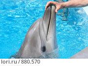 Купить «Дельфин», фото № 880570, снято 7 мая 2009 г. (c) Яна Королёва / Фотобанк Лори