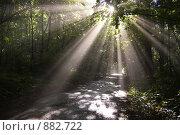 Купить «Лучи солнца в роще», фото № 882722, снято 1 июля 2008 г. (c) Евгений Большаков / Фотобанк Лори