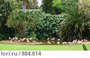 Купить «Фламинго в Лоро Парке на о. Тенерифе», фото № 884814, снято 17 июня 2007 г. (c) Елена Велесова / Фотобанк Лори