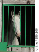 Морда лошади через решетку. Стоковое фото, фотограф Любовь Похабова / Фотобанк Лори