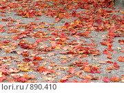 Купить «Кленовые листья», фото № 890410, снято 20 сентября 2008 г. (c) Синицын Игорь / Фотобанк Лори