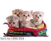 Купить «Котята», фото № 890554, снято 21 марта 2009 г. (c) Cветлана Гладкова / Фотобанк Лори