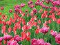 Весеннее украшение клумб, фото № 891226, снято 25 мая 2009 г. (c) Людмила Жмурина / Фотобанк Лори