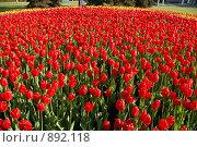 Купить «Тюльпаны», фото № 892118, снято 23 января 2005 г. (c) Бондарь Дмитрий / Фотобанк Лори