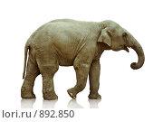 Слон на белом фоне. Стоковое фото, фотограф Виктор Застольский / Фотобанк Лори