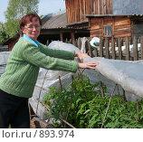 Купить «Женщина закрывает помидоры пленкой», эксклюзивное фото № 893974, снято 31 мая 2009 г. (c) Ирина Солошенко / Фотобанк Лори
