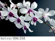 Цветы орхидеи. Стоковое фото, фотограф ElenArt / Фотобанк Лори