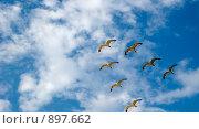 Купить «Полет чаек», фото № 897662, снято 15 июля 2007 г. (c) Сергей Галушко / Фотобанк Лори
