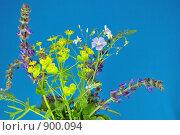 Букет полевых цветов на голубом фоне. Стоковое фото, фотограф Григорий Дашкин / Фотобанк Лори