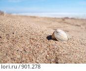 Пляж. Стоковое фото, фотограф Михаил Сметанин / Фотобанк Лори