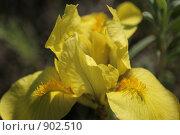 Желтый цветок, макро. Стоковое фото, фотограф Любовь Похабова / Фотобанк Лори