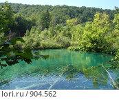 Упавшие в воду деревья на Плитвицких озерах(Хорватия) (2008 год). Стоковое фото, фотограф Евгения Кускова / Фотобанк Лори