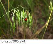 Солнышко. Стоковое фото, фотограф Сергей Пупков / Фотобанк Лори