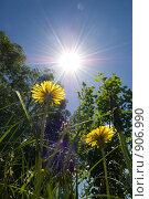 Купить «Тяга к свету», фото № 906990, снято 31 мая 2009 г. (c) Евгений Большаков / Фотобанк Лори