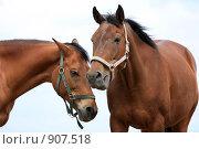 Купить «Лошади», фото № 907518, снято 6 июня 2009 г. (c) Яна Королёва / Фотобанк Лори