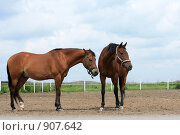 Купить «Две лошади», фото № 907642, снято 6 июня 2009 г. (c) Яна Королёва / Фотобанк Лори