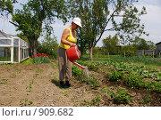 Купить «Пенсионерка поливает клубнику», фото № 909682, снято 6 июня 2009 г. (c) Елена Климовская / Фотобанк Лори