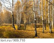 Осенний пейзаж, фото № 909710, снято 8 октября 2008 г. (c) Юрий Бельмесов / Фотобанк Лори