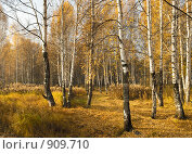 Купить «Осенний пейзаж», фото № 909710, снято 8 октября 2008 г. (c) Юрий Бельмесов / Фотобанк Лори