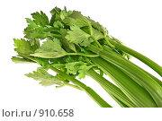 Купить «Зеленые стебли сельдерея», фото № 910658, снято 11 марта 2009 г. (c) Дмитрий Яковлев / Фотобанк Лори