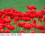 Купить «Красные тюльпаны», фото № 913158, снято 24 мая 2009 г. (c) Карелин Д.А. / Фотобанк Лори