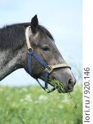 Купить «Голова лошади крупным планом», фото № 920146, снято 14 июня 2009 г. (c) Яна Королёва / Фотобанк Лори