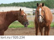 Купить «Две лошади в загоне», фото № 920234, снято 14 июня 2009 г. (c) Яна Королёва / Фотобанк Лори